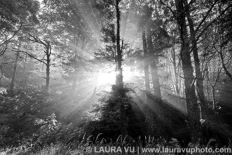 Black and White Forest Pictures