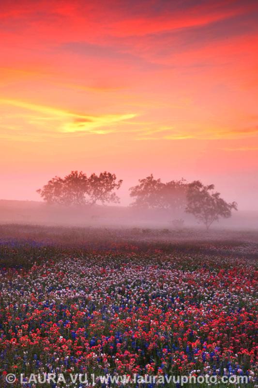 Explosion of Texas wildflowers