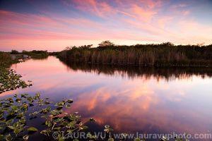 Everglades Glow - Everglades, Florida