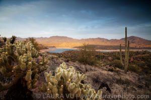 Fleeting Moment - Tonto National Forest, Arizona