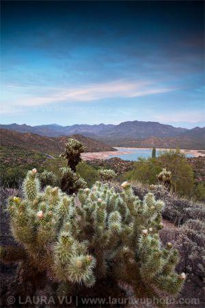 Illuminating Cholla Cactus - Tonto National Forest, Arizona