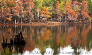 Southern Charm - Caddo Lake State Park, Texas