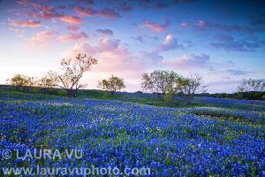 Spring in Texas - Palmer, Texas